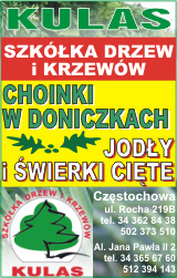 Kulas - szkółka drzew i krzewów - Częstochowa. Choinki w doniczkach, jodły i świerki cięte.